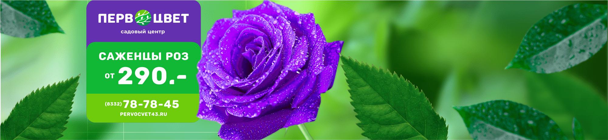 Слайдер роза от 290 руб