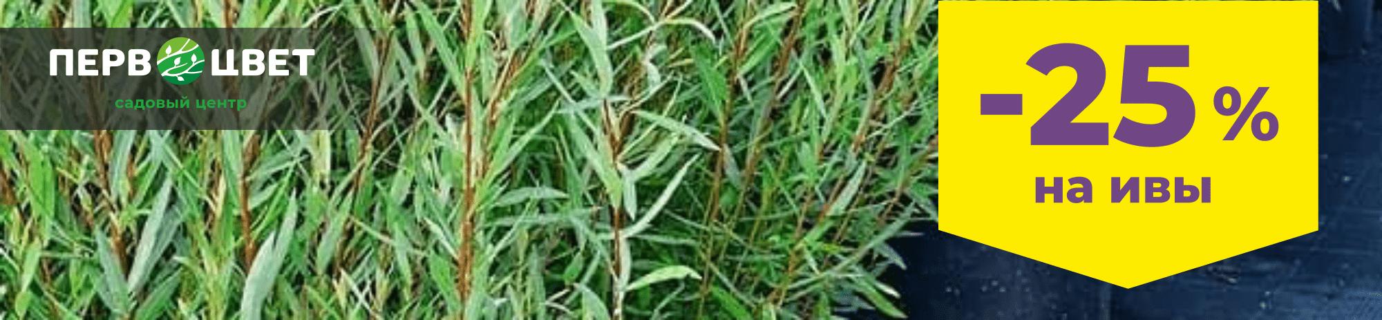 ivy-6